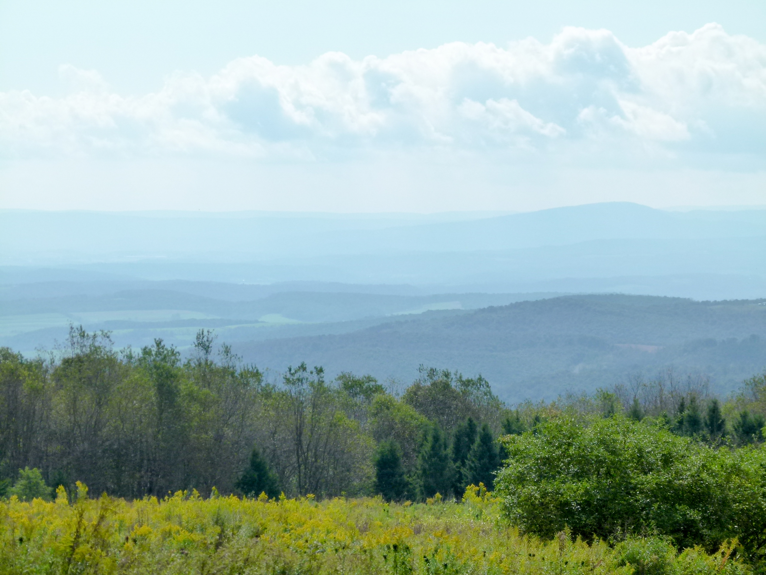 View from near the top of Blue Knob Mountain.