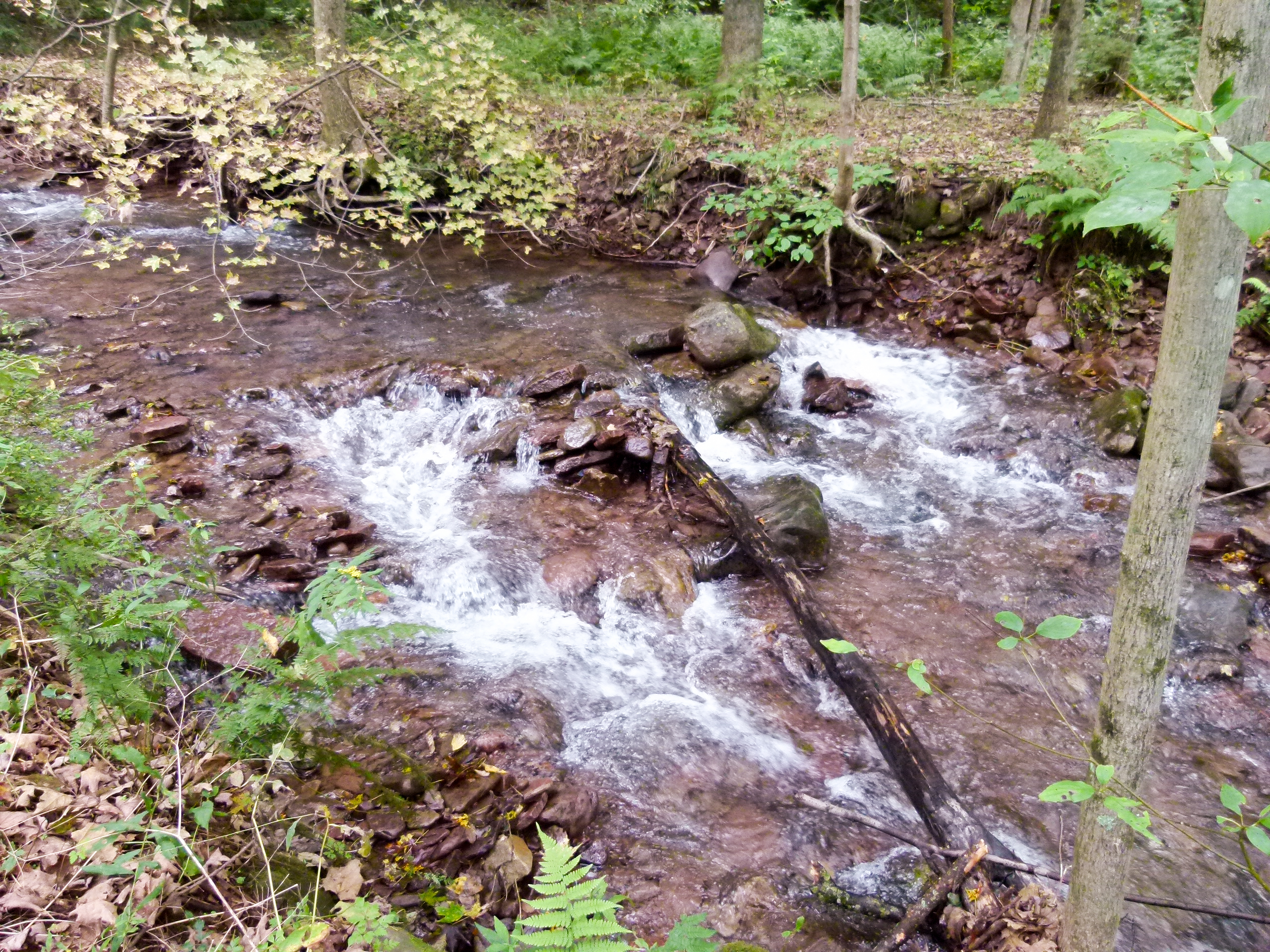 A fast moving stream near the entrance to Blue Knob State Park.