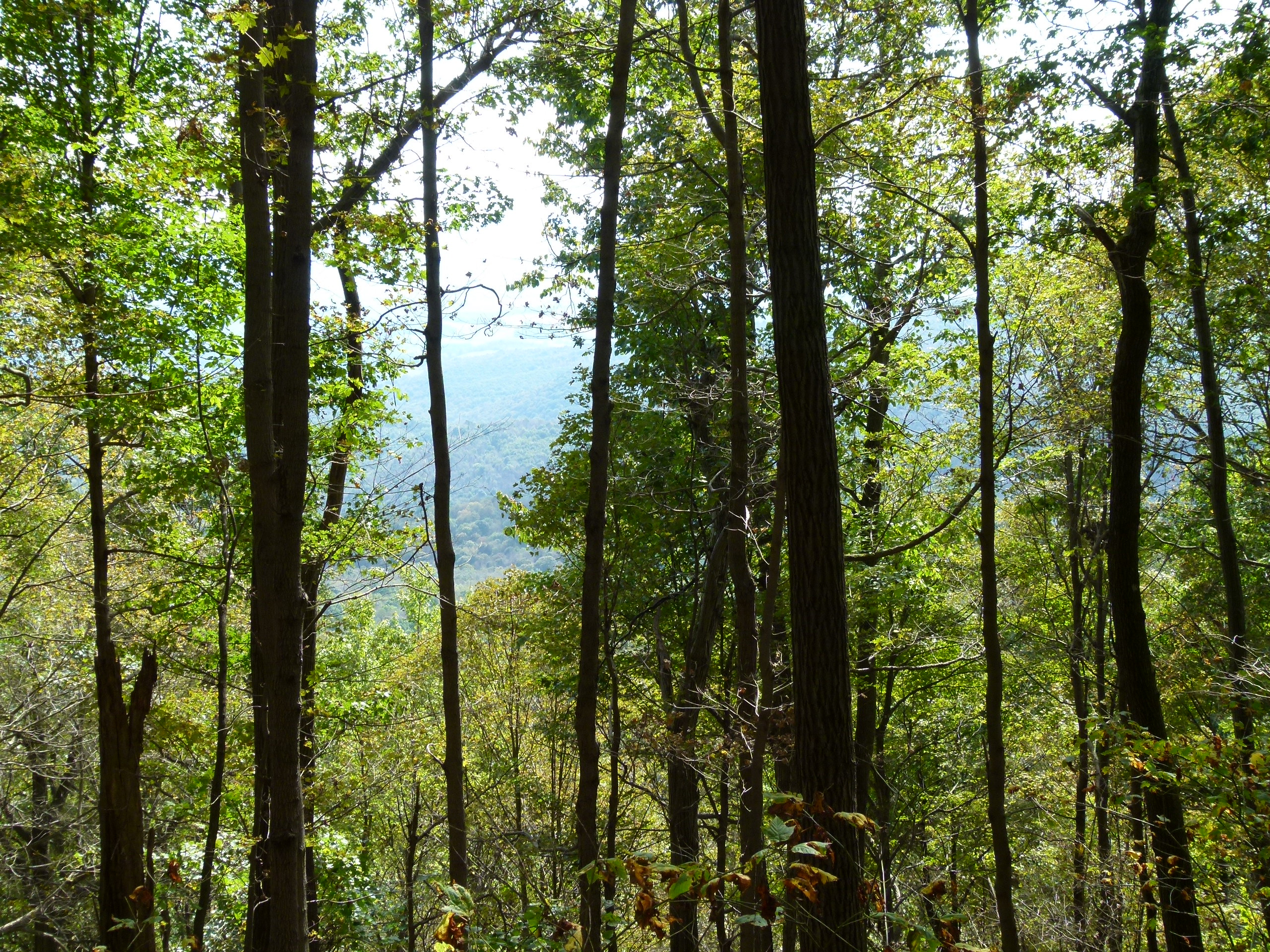 You can see the next mountain over through the gap in the tree canopy.