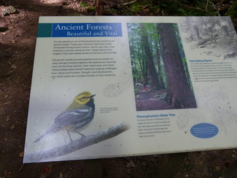 Laurel Hill State Park-17