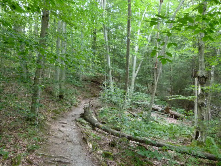 The beginning of Hemlock Trail.